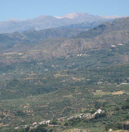 polyrhinia view